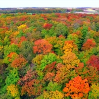 Photo of Fall Tour, Helicopter Ride, Michigan Helicopter Tours, MI Flight Aviation, Fall Colors, Tre